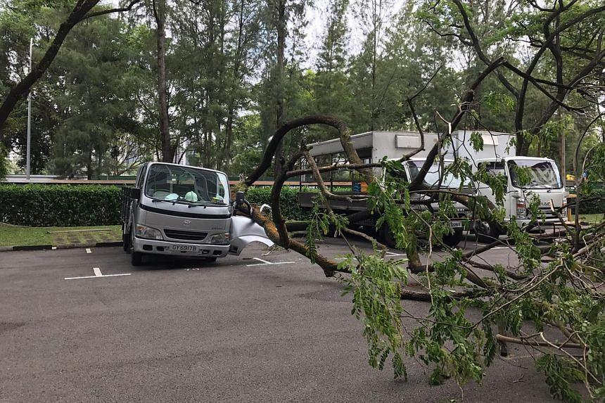The tree fell in the carpark of a block of student apartments, injuring a woman who was visiting one of the tenants.