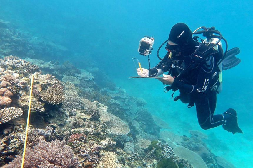 Scientists investigate a bleaching event at the Great Barrier Reef off Australia in a file photo.