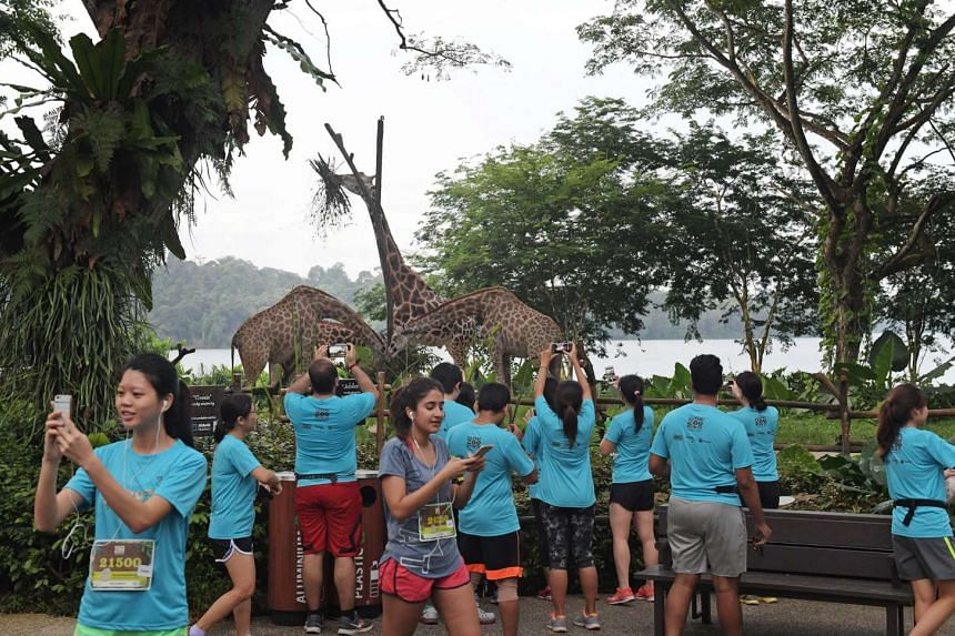 The ninth instalment of Safari Zoo Run saw participants choose teams representing animal icons of the four wildlife parks to champion a species of critically endangered animal.