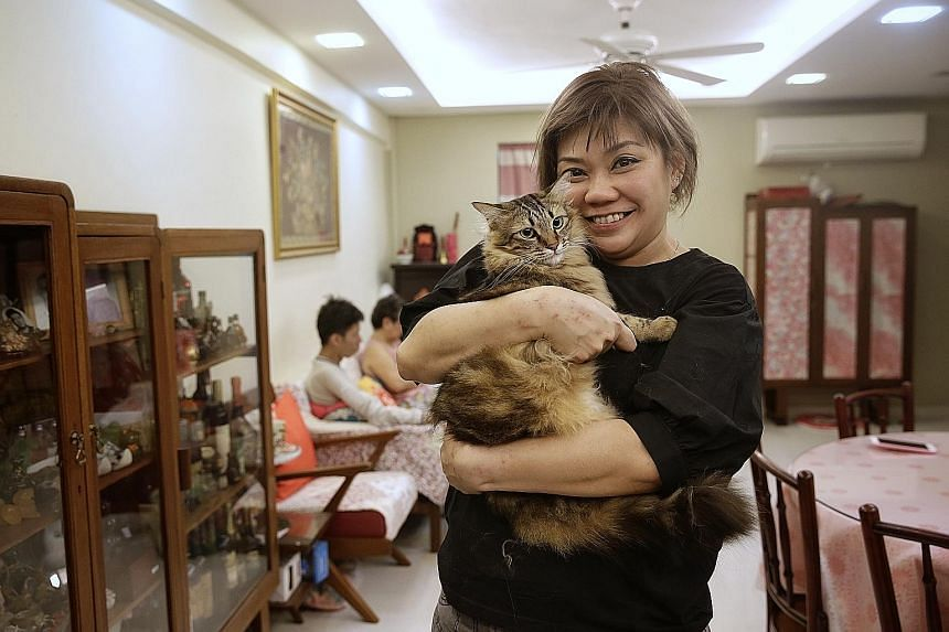 Sisters Vera (left), 11, and Victoria Chern, 13, with their two-year-old maltese Momo. Their father Oliver suggests that dog ownership rules could be adapted for cats. Ms Jocelyn Tan, seen here with her one-year-old cat Cookie, says responsible owner