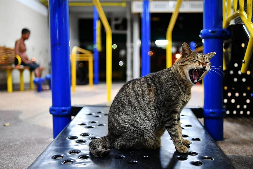 The ban on cats in Housing Board (HDB) flats has been in force since Singaporeans moved into the first such flats in 1960.