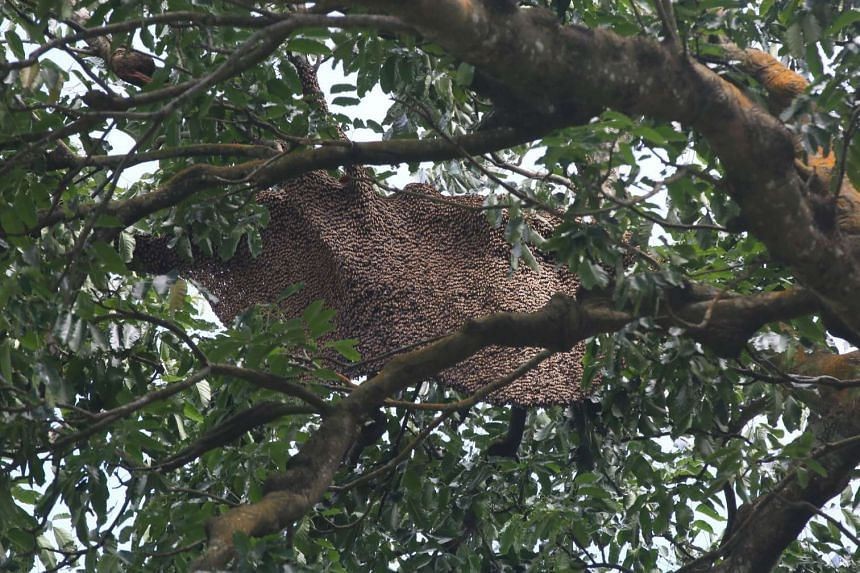 A woman in her 30s who was badly stung by a swarm of bees in Ang Mo Kio Garden West was taken to hospital.