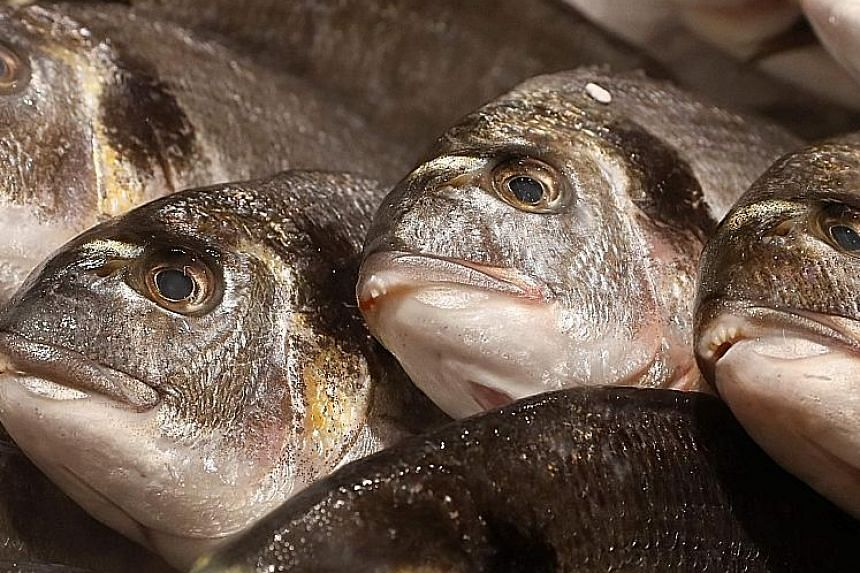 Fresh fish have bright, plump and shiny eyes.