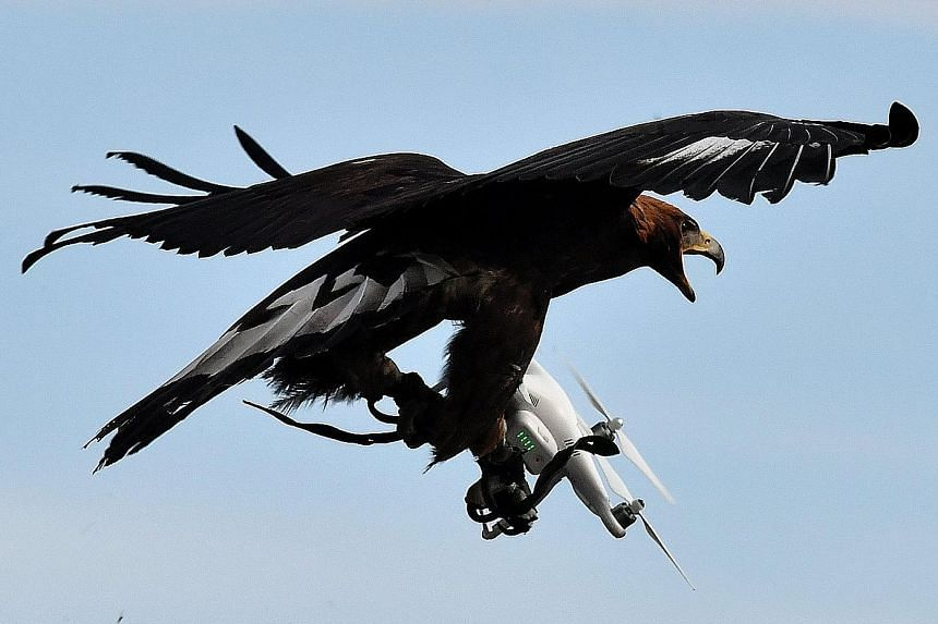 An eagle taking down a drone at Mont-de-Marsan airbase in France.