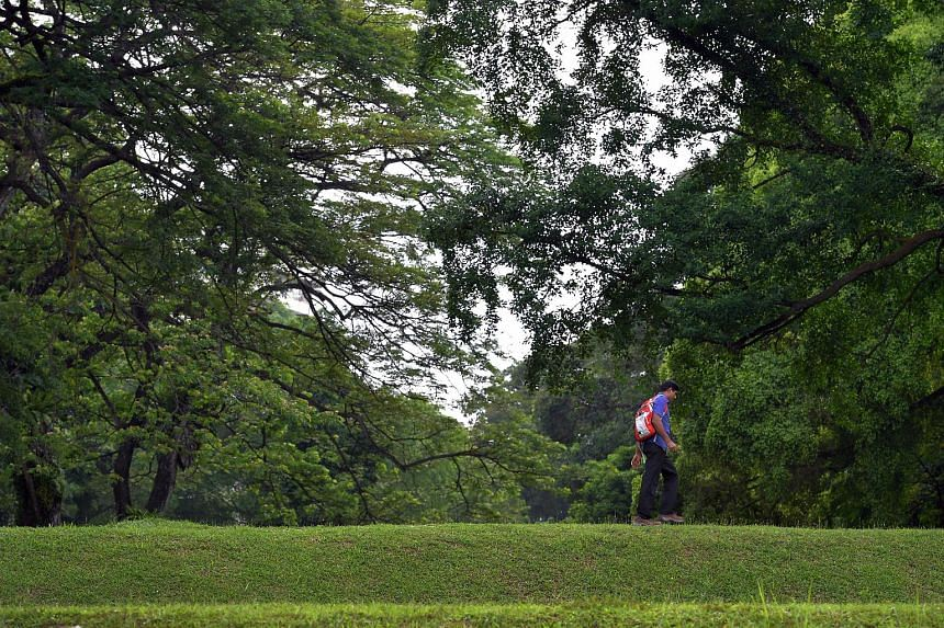 Singapore is the city with the highest density of greenery based on a list of 17 cities, according to an interactive website which measures canopy coverage.