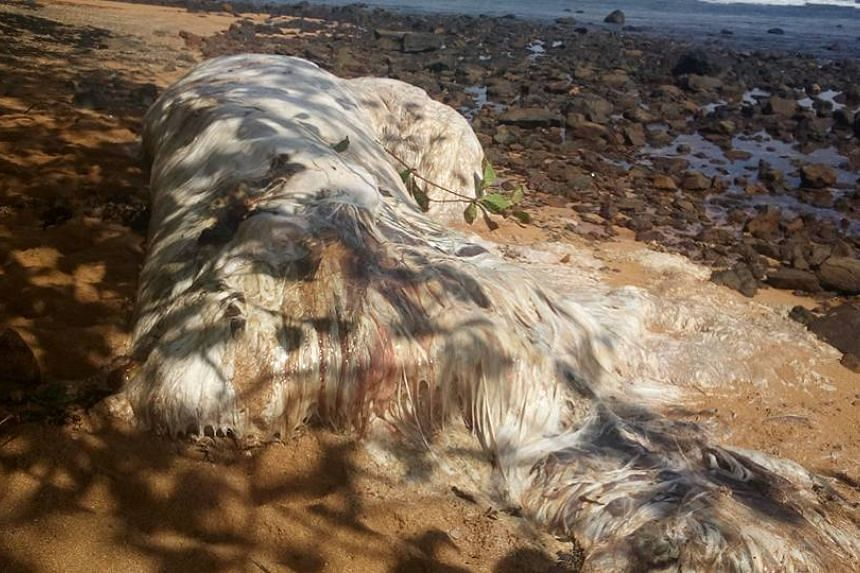 The carcass washed ashore on a beach in Cagdianao, part of the Dinagat Islands in the Philippines.