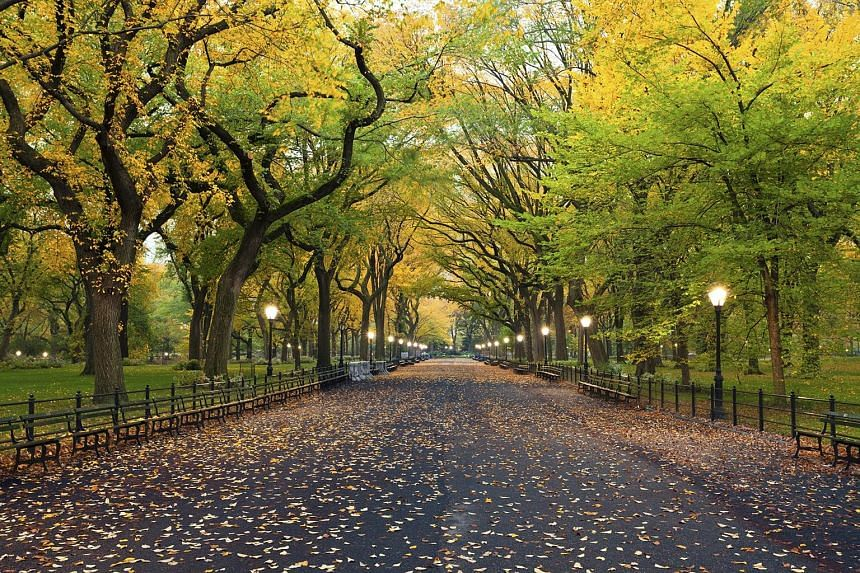Fly to New York on Emirates and take in the sights and sounds of Central Park.