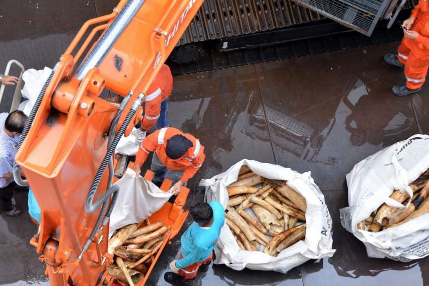 A file photo from 2016 showing workers loading pieces of seized ivory onto an excavator which dropped them into an industrial rock crusher.