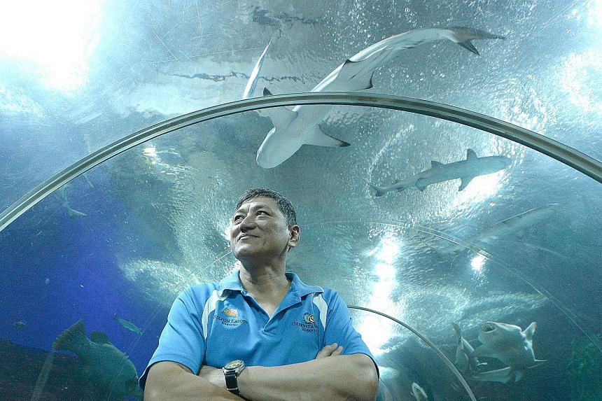 Mr Chan, a senior diver at Underwater World Singapore, and other divers were trying to herd a leopard whiptail ray to a shallower area in its tank when he suddenly shouted and collapsed. He was pronounced dead 1½ hours later.