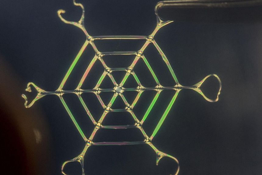 Drawing inspiration from nature, researchers at Tufts University in the United States have developed a technique that transforms silk protein into complex materials that are ultra-light and strong. Among the various structures generated was this web
