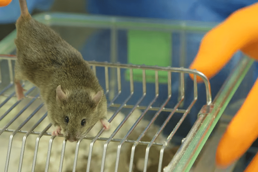A researcher examines a mouse in a screenshot from an online video.