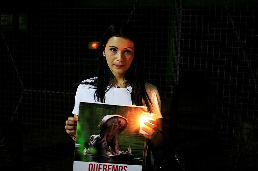 A demonstrator in San Salvador with a photo of Gustavito, a 15-year-old hippo which died in the National Zoological Park in eastern San Salvador last month. The zoo claimed that the animal was killed in a stabbing attack but a workers' union said the