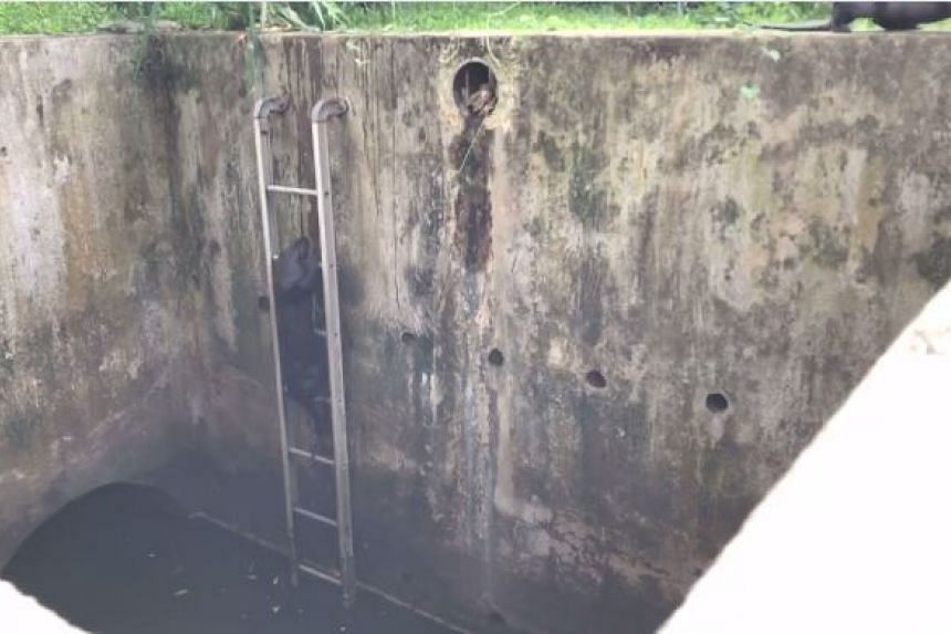 Two otters were filmed climbing up a ladder from a drain in Singapore.