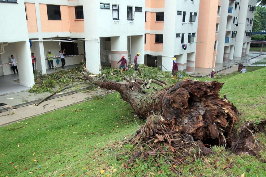 A tree that fell at Holland Close on Oct 3, 2016.
