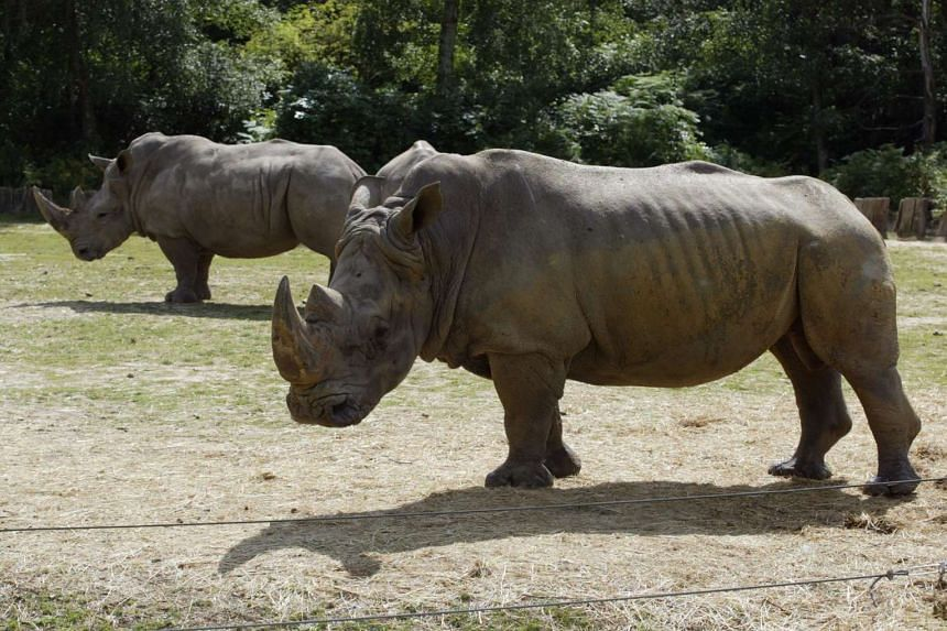 This file photo taken on Aug 1, 2002 shows two rhinoceros at the Thoiry Zoo in Thoiry.