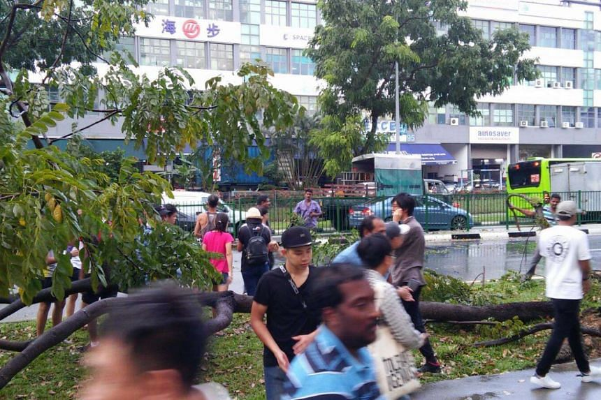 People helping to move a tree that fell along Kaki Bukit Avenue 1 on March 6, 2017.