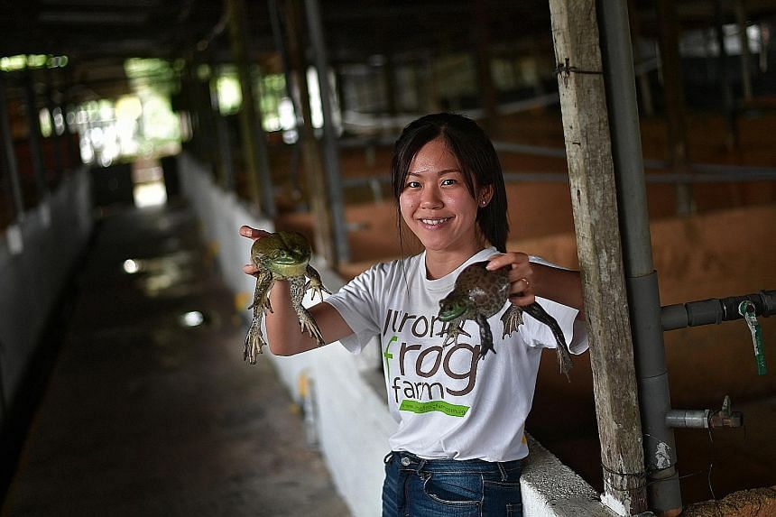 Jurong Frog Farm director Chelsea Wan with two American bullfrogs at her farm. Minister of State Koh Poh Koon yesterday provided details of the plan to improve the local farming sector.