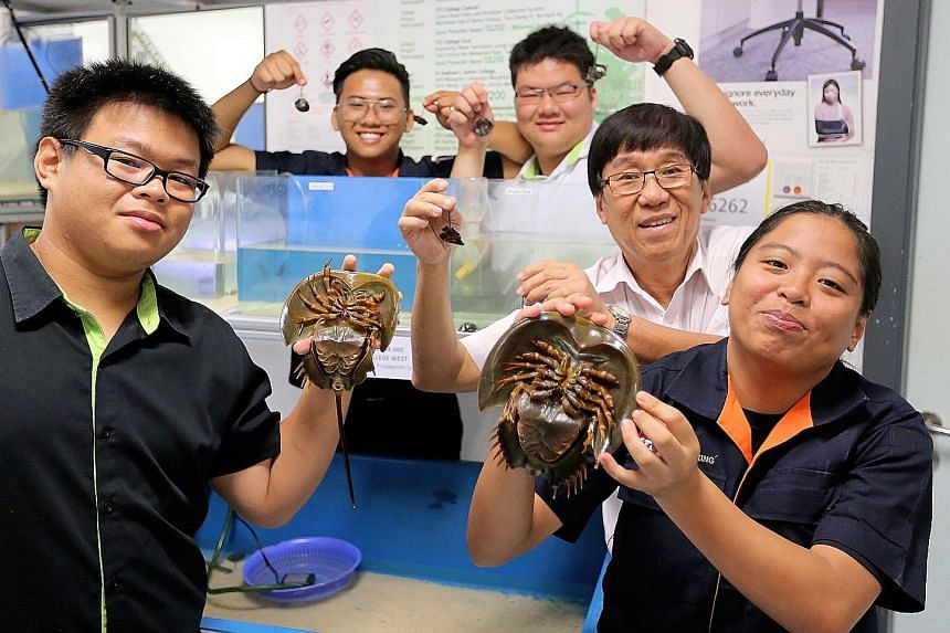ITE College West lecturer Hoo Pek Teng with students (clockwise from bottom right) Nurul Hanna Abdul Yakob and Dave Chong, both 19, Eunos Chong, 18, and Douglas Yii, 21, who successfully bred horseshoe crabs in a project.
