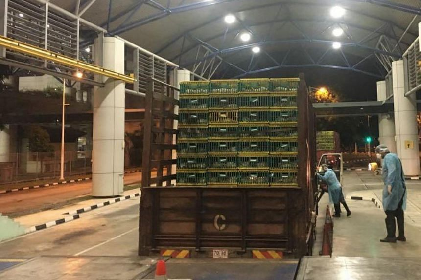 AVA inspectors conducting an inspection on live poultry being brought into Singapore at the Tuas checkpoint.