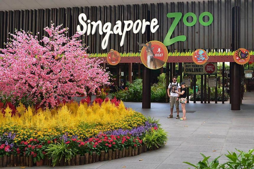 There will be a new direct bus service to the Singapore Zoo that leaves from Khatib MRT Station starting from Friday (March 10).