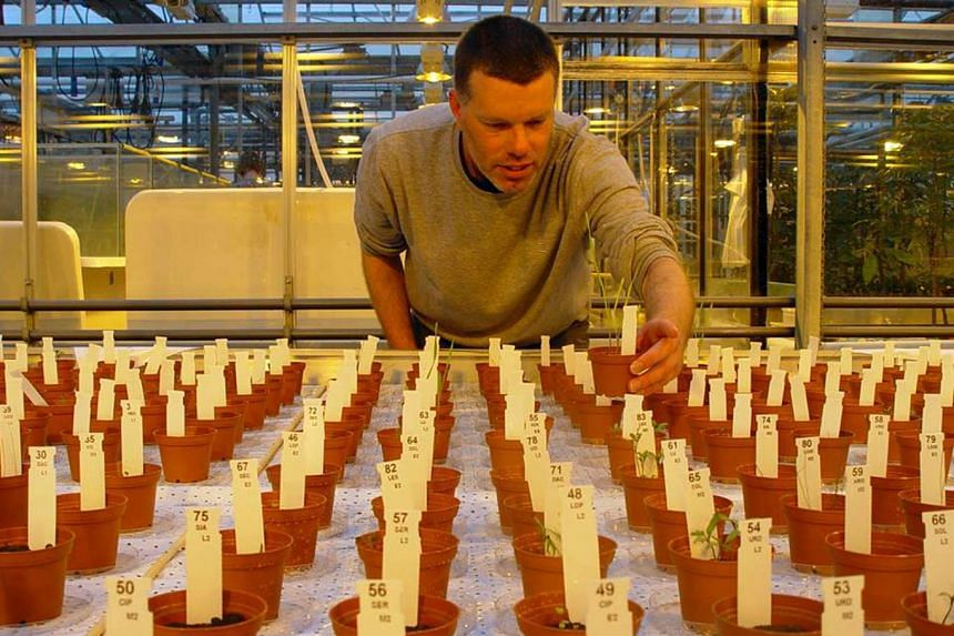"""Dr Wieger Wamelink with samples of plants grown in Mars and Moon soil simulants. The botanist and ecologist is eyeing the potential of developing a """"small but sustainable ecosystem"""" in space."""