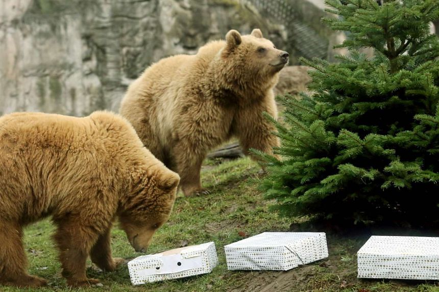 Brown bears pictured at a different zoo in Germany in a December 2016 file photo.