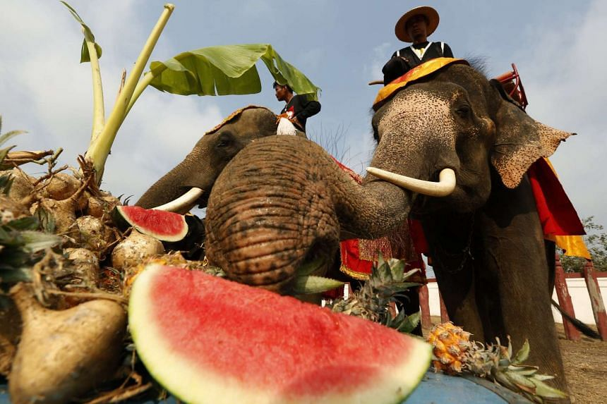 Elephants eat various kinds of fruit and vegetables during an elephant buffet to mark the National Elephant Day at the Elephant Kraal Pavillion of the ancient historical city in Ayutthaya province, Thailand, on March 13, 2017.