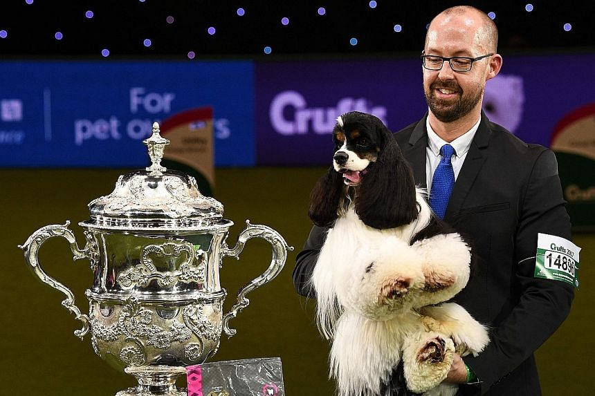 Miami, an American cocker spaniel, has won the top prize at Britain's Crufts dog show in Birmingham. The black, white and brown gun dog, whose full name is Afterglow Miami Ink, was crowned Best In Show on Sunday after four days of competing with near