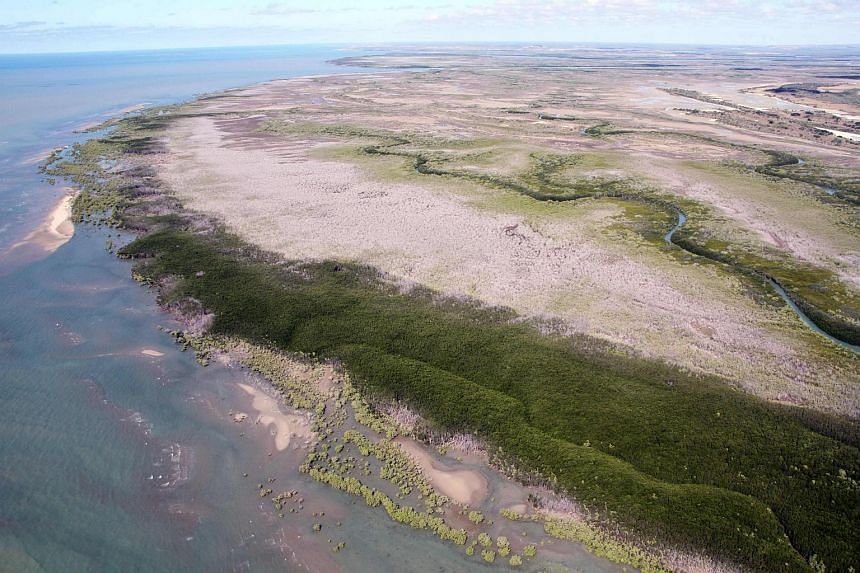 Large swathes of dead mangroves in the Gulf of Carpentaria, Australia's remote north in 2016.