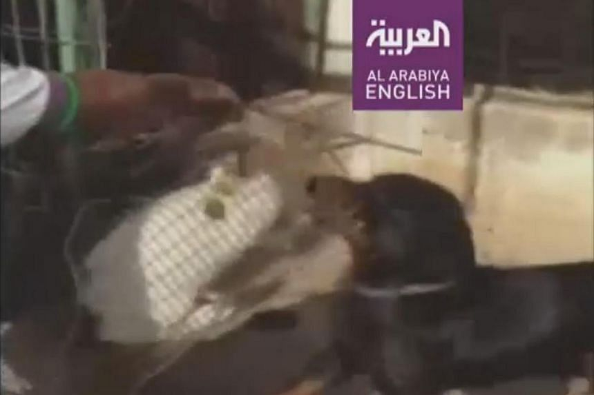 Dubai police have arrested a man who fed a live cat to two dogs, reportedly for having eaten some birds.