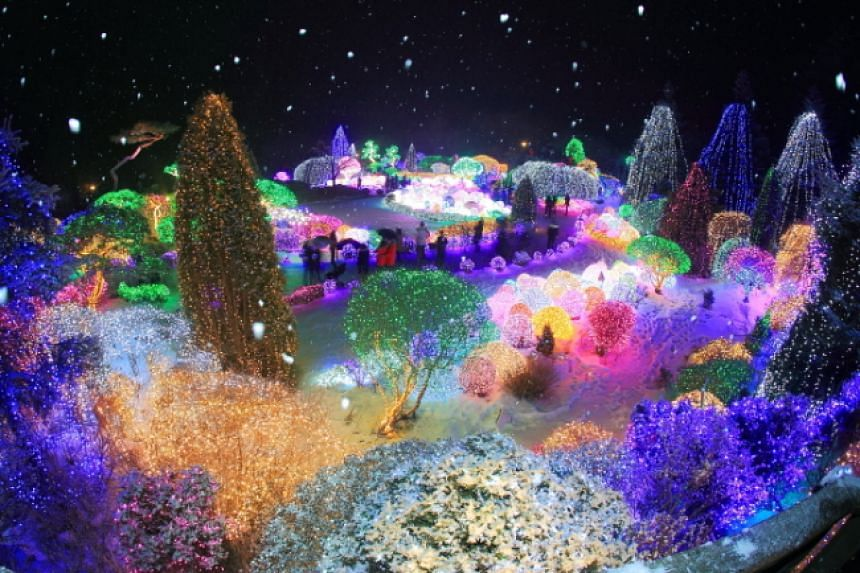 Some 30,000 lights illuminate the greenery at the Garden Of Morning Calm in Geonggi province in Korea.