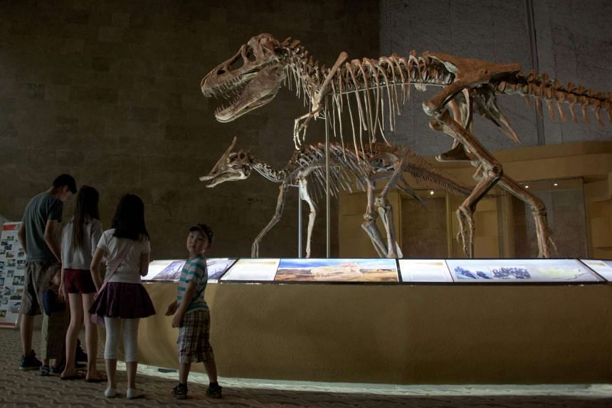A museum displaying dinosaur fossils in Ulan Bator. The alleged thief is said to have stolen 80 fossilised dinosaru eggs from a collector in the eastern province of Zhejiang.