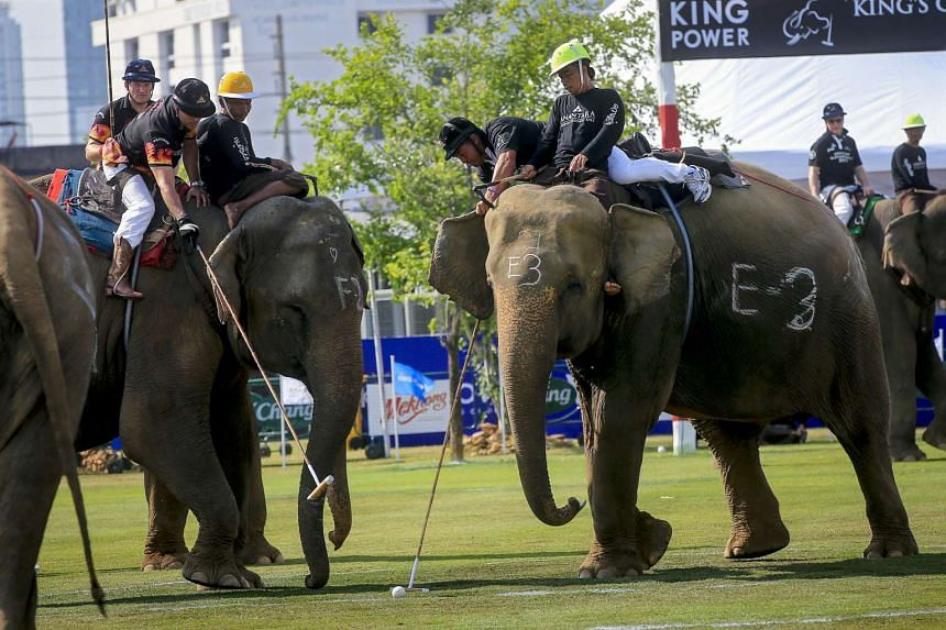 Elephant polo players in action during the King's Cup Elephant Polo Tournament 2017 on the second day of play between teams All Blacks (Black) and Benihana (black and red) in Bangkok, Thailand, on March 10, 2017.