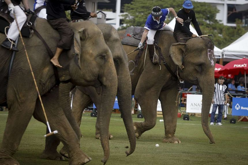 Elephant polo players in action during the King's Cup Elephant Polo Tournament 2017 on the first day's play between teams All Blacks (Black) and King Power (Blue) in Bangkok, Thailand, on March 9, 2017.