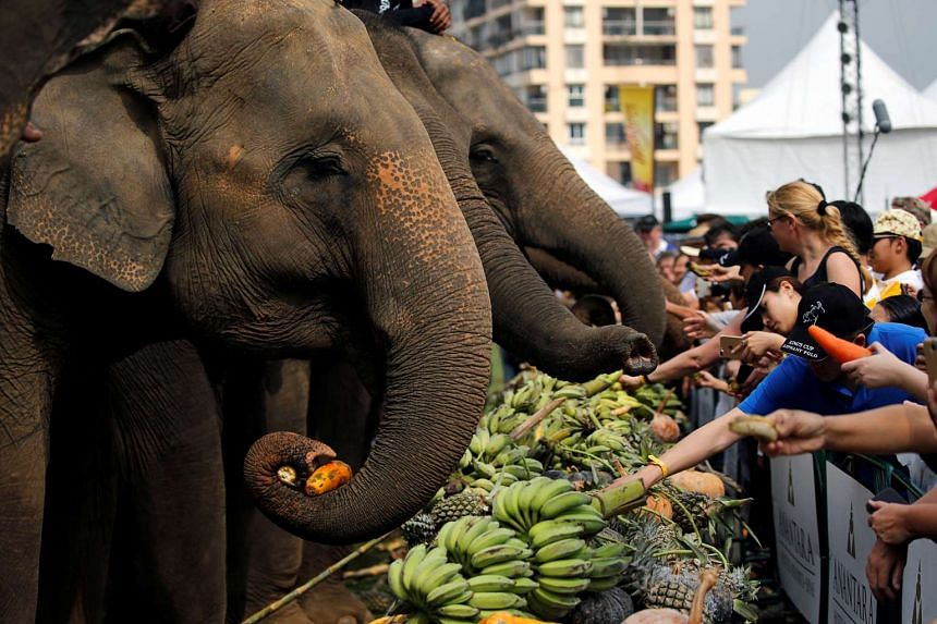 People feeding elephants before a match at the annual King's Cup Elephant Polo Tournament at a riverside resort in Bangkok, Thailand, on March 9, 2017.