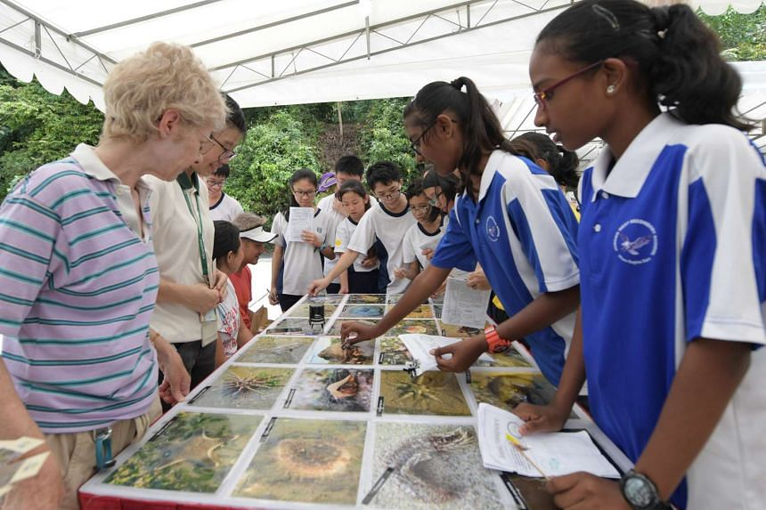 NParks BioBlitz and Community in Nature Schools' Day Out at Kent Ridge Park.