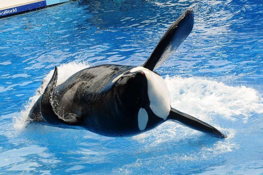 The Zhonghong Zhuoye group said it will buy a 21 per cent stake in SeaWorld Entertainment, whose shows featuring killer whales have been slammed by animal rights groups.