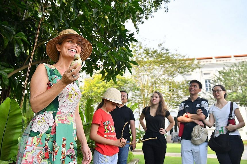 Mrs Kristine Oustrup Laureijs introducing the noni fruit to her tour group outside the National Museum of Singapore last month. Since rules forbid the plucking of living plants, she gets her samples from acquaintances who own the plants.