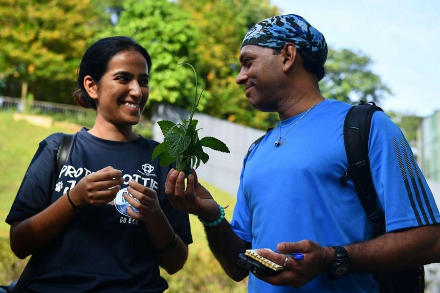Research assistant Lisha Raghani (left) and yoga teacher Balakrishnan Matchap with the Indian snakeweed plant, during a tour led by Mrs Oustrup Laureijs. They learnt that the plant's flowers taste like mushrooms.