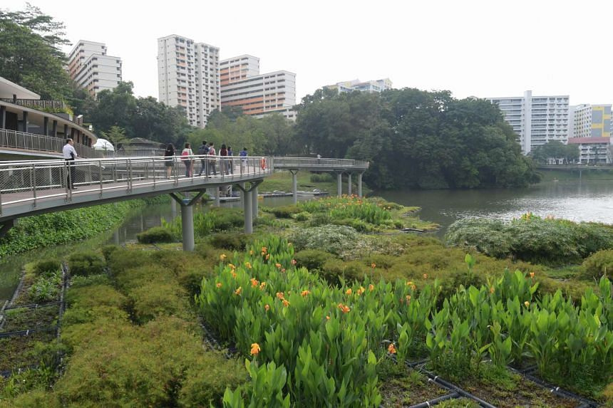 Visitors can see wetland plants, such as the leather fern, fragrant pandan, water canna and miniature flatsedge. The plants help improve water quality and also create a habitat for dragonflies, birds and fishes.