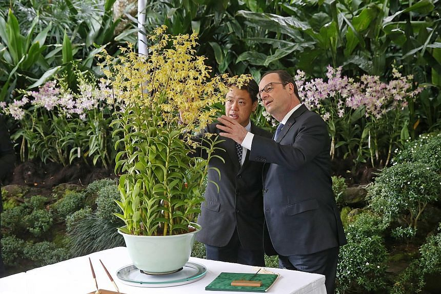 Mr Hollande viewing the Dendrobium Francois Hollande, a hybrid species named after him, with National Parks Board CEO Kenneth Er at the National Orchid Garden yesterday.