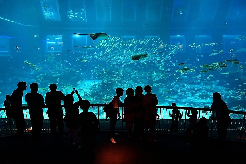 The S.E.A. Aquarium opened in 2012 and welcomed its 10 millionth visitor yesterday. From now till April 9, children aged between four and 12 visiting the aquarium on a one-day ticket will enjoy a free upgrade to a child annual pass. Mr Samuel Ang, hi
