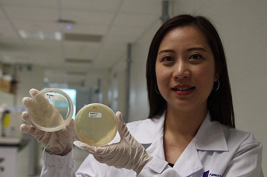 Dr Tan's team has developed both a bio-silver hybrid material and a similar material that uses only biological molecules to kill germs.