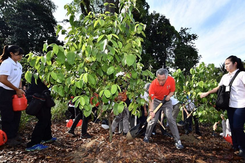 Prime Minister Lee Hsien Loong planting Singapore Kopsia (Kopsia singapurensis) tree at the Learning Forest of Singapore Botanic Gardens on March 31, 2017.