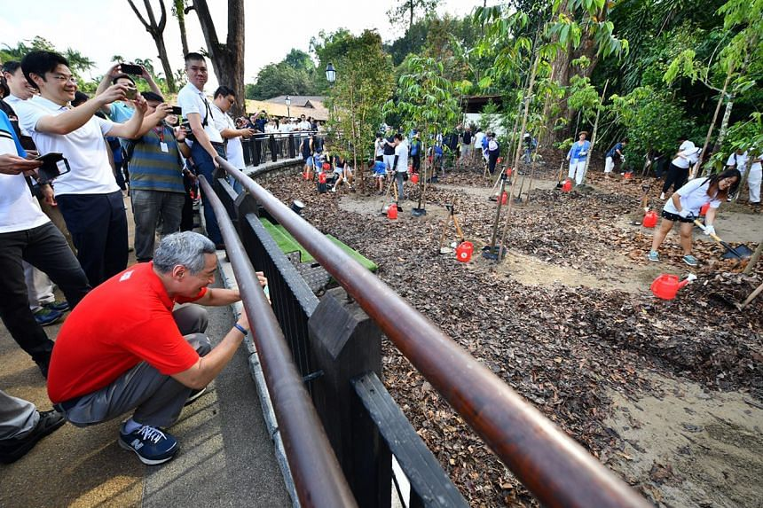 PM Lee Hsien Loong and Mr Lawrence Wong, Minister for National Development and Second Minister for Finance, at the opening of Singapore Botanic Gardens Learning Forest on March 31, 2017.