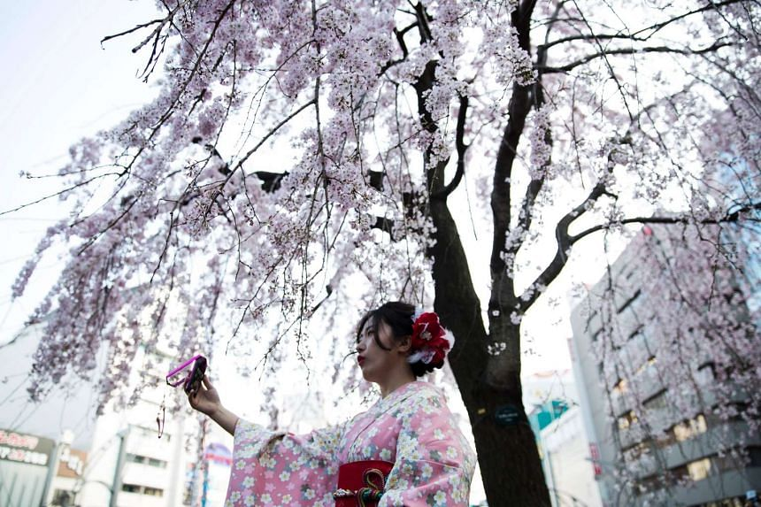 A woman taking a selfie under a blooming cherry blossom tree in a park in Tokyo on March 29, 2017.