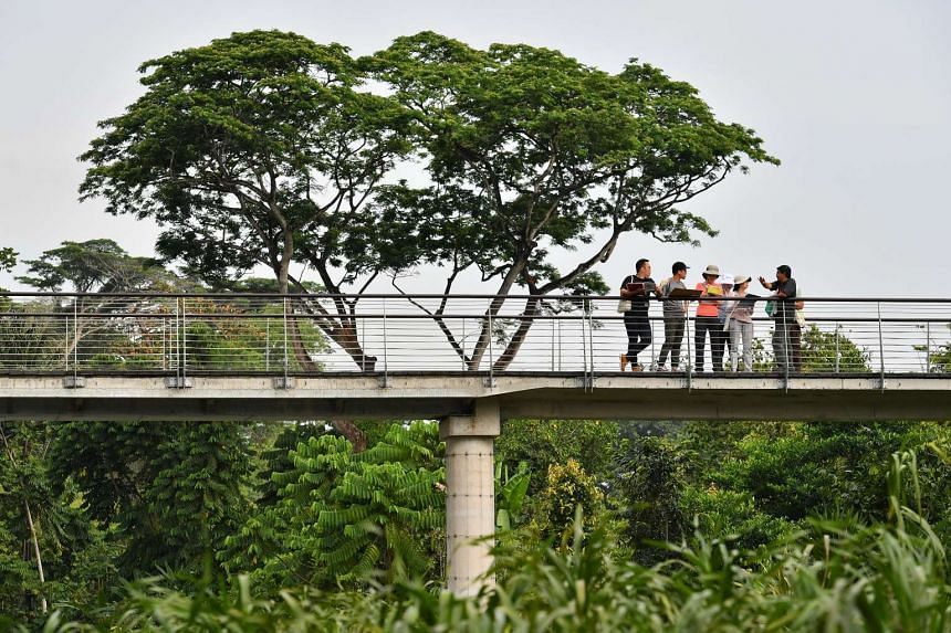 Prime Minister Lee Hsien Loong will officially open the Learning Forest, a new conservation core of the Singapore Botanic Gardens on March 31, 2017.
