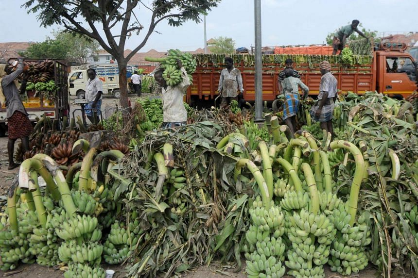 Labourers unload bananas from a truck at a market in Chennai. Last year, the government announced plans to rescue more than 18 million bonded labourers by 2030.