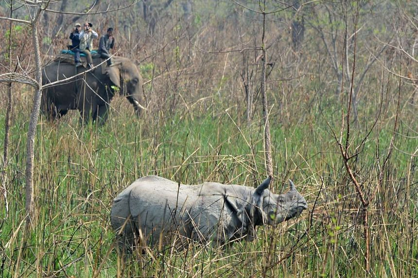 This file photo taken on April 3, 2017 shows a Nepalese veterinary and technical team preparing to dart a rhino in Chitwan National Park, some 250 kms south of Kathmandu.