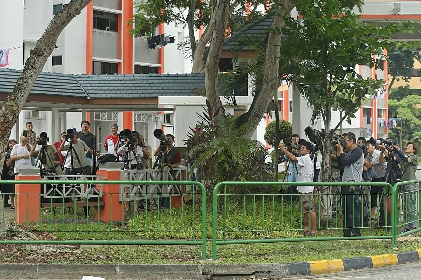 Scores of photographers wait patiently to capture a shot of one of these blue-crowned hanging parrots, which have been nesting in a tree near Pek Kio Market and Food Centre, and their chicks.